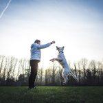 chien berger blanc qui saute